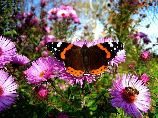 butterfly bee and purple flowers