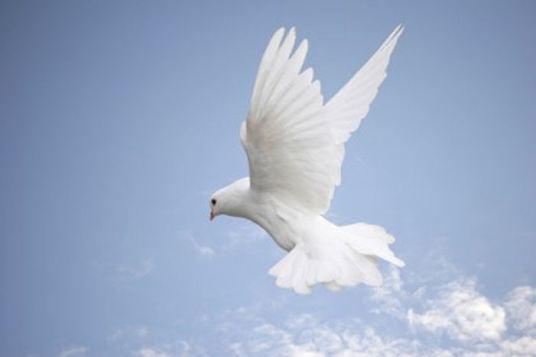 spiritual dove (1)