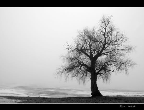 alone in the fog by romeo koitmae