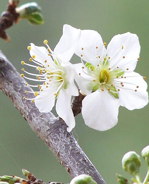 love friendship white flower