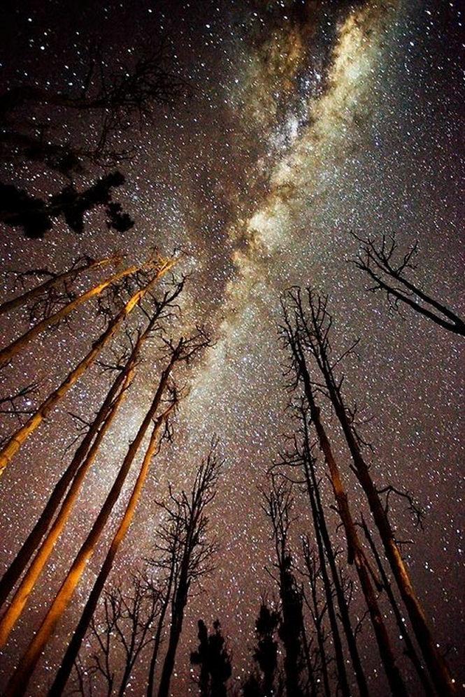 trees and night sky fireflies and polka-tumblr