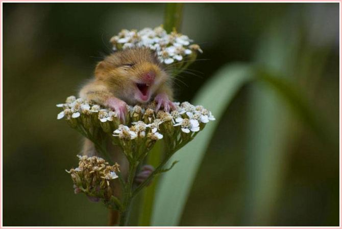 happy mouse