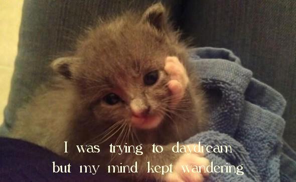 kept wandering kitten jack benny