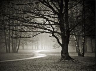 hesse tree