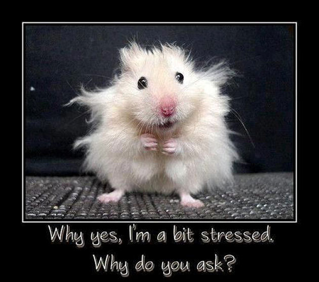 mouse frazzled bit stressed