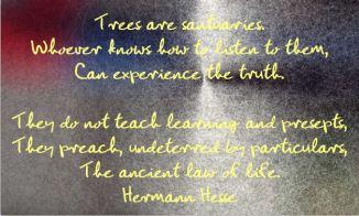 trees hesse