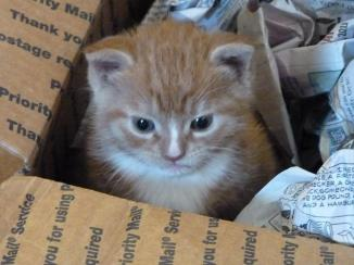 carter in his box 1024x768