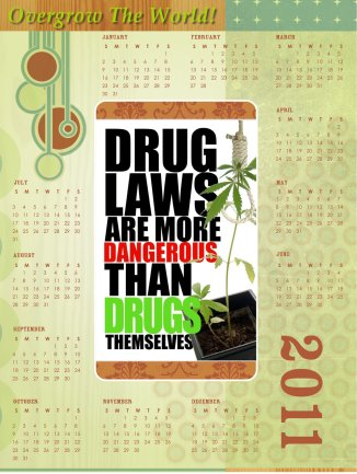 drug laws more dangerous than drugs