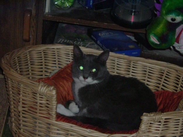 sigmund posing in basket
