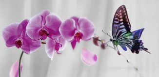(1) purple flowers with clourful butterfly beautiful