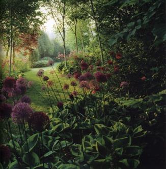 garden purple flowers
