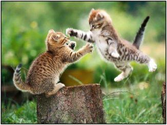 4p kung fu kittie hie ya