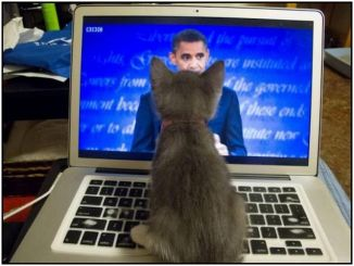 4p laptop kitten obama