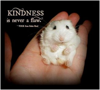 4p tuck says kindness is never a flaw