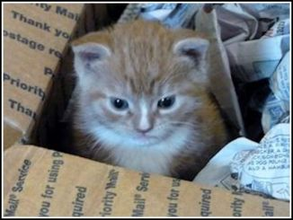 Baby Carter in his first box by himself