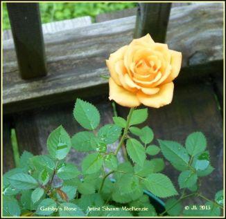 Gatsby's Rose --- Photographer Shawn MacKenzie