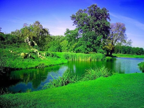 9 a fresh green world