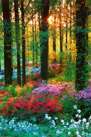 rainbow woods colours