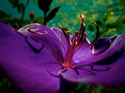 scary purple flower