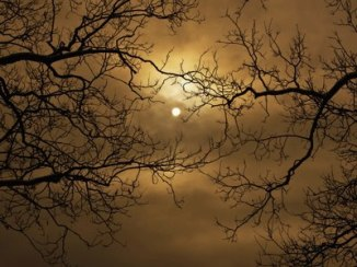 moonlight and sleleton trees (alter)