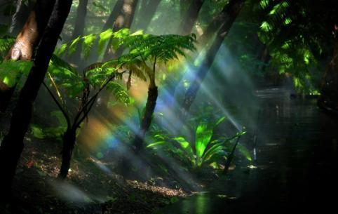 sun rays into forest