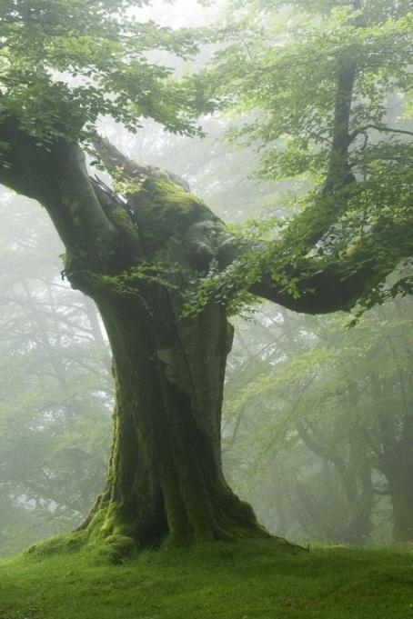 massive tree impressive