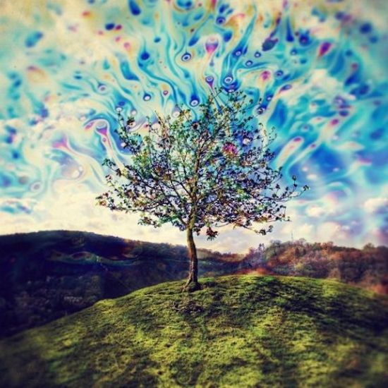 what tree looks while tripping on acid [lsd]