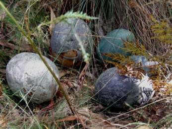 20110206-Dragon-eggs-7