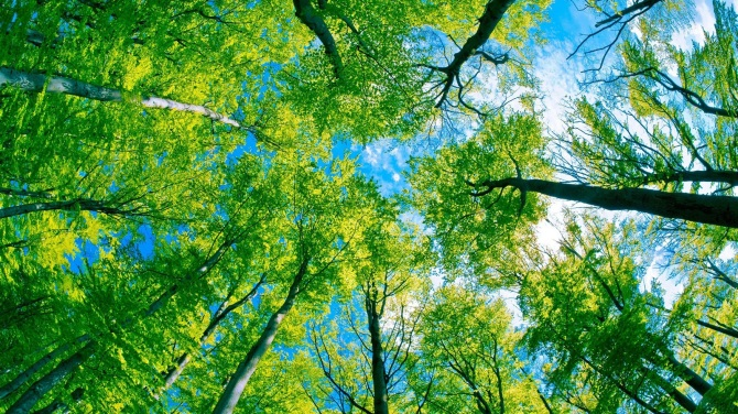 forest-trees-green-paradise summer