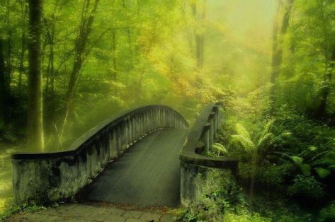 enchanted green walking bridge