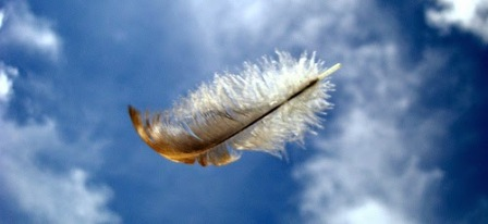 feather-in-the-wind