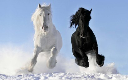 #57 two-wild-horse-in-white-and-black-jpg