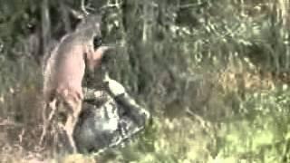 deer exactly revenge on hunter