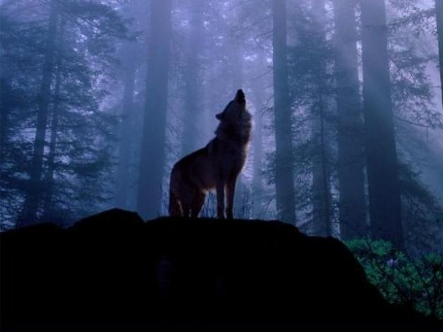 howling_wolf #73