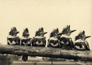 pt 1 6 birds on a log in a row