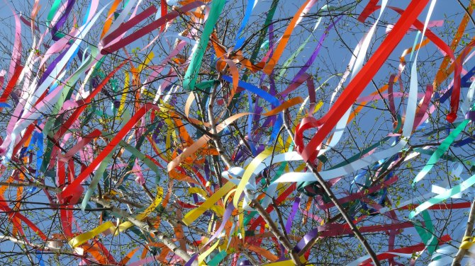 may day ribbons amongst the trees