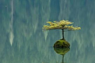 water washing down on one lone tree's reflection