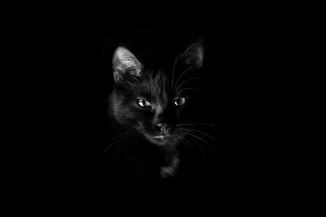 black cat with black background