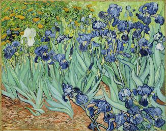 tick-tock-van-gogh-irises-w-one-solitary-white-flower