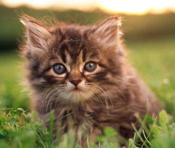 'maggie the cat'