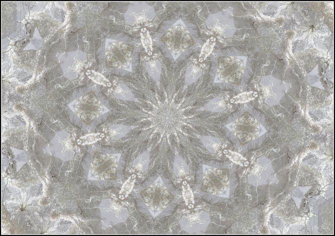 licornes-blanches-par-j-kiley
